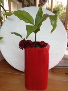 Le pot rouge d'Aurore